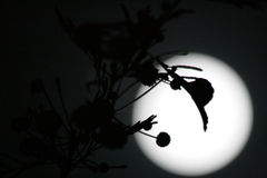 Тени на луне Стоковая Фотография RF