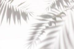 Тени от пальм на белой стене стоковое изображение