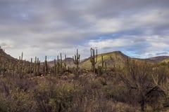 Тени пустыни в море облаков Стоковая Фотография