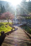 Тени слив на зеленой траве с цветением сливы Стоковые Фото