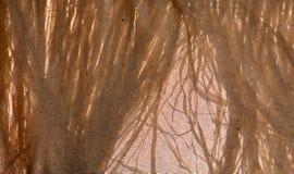 Тени травы на холсте Стоковая Фотография