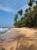Тень вала кокоса на пляже Стоковая Фотография