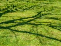 Тень ветвей дерева на зеленой траве Стоковая Фотография RF