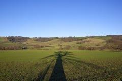 Тень дерева зимы на пшеничном поле саженца Стоковые Фотографии RF