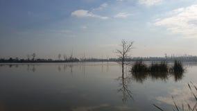 Тень дерева на озере Стоковое Фото