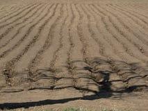 Тень дерева на поле картошек Стоковые Фотографии RF