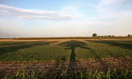 тень дерева на поле Стоковые Фото