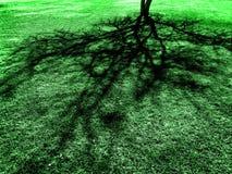 Тень дерева весной на сочной зеленой траве Стоковое Изображение RF
