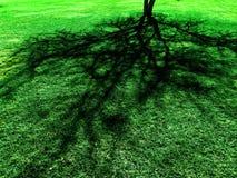 Тень дерева на зеленой сочной траве Стоковые Фото