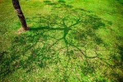 Тень дерева на зеленой траве Стоковые Изображения RF