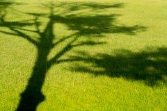 Тень дерева на зеленой траве Стоковые Изображения