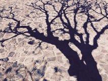 Тень дерева на каменном поле Стоковое фото RF