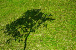 Тень дерева на короткой зеленой траве Стоковое Фото