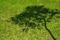 Тень дерева на короткой зеленой траве Стоковые Изображения