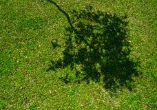 Тень дерева на короткой зеленой траве Стоковые Фото