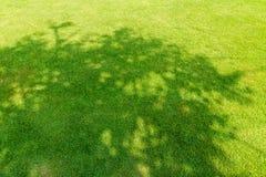Тень дерева на короткой зеленой траве Стоковое Изображение