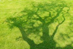Тень дерева на короткой зеленой траве Стоковые Фотографии RF