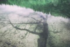 Тень дерева на отражении воды Стоковое фото RF