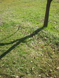 Тень дерева Стоковая Фотография RF