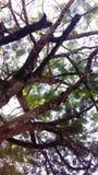 Тень дерева Стоковые Изображения