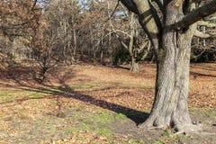 Тень дерева i Стоковое фото RF