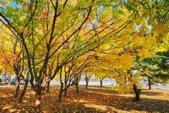 Тень деревьев осени Стоковые Фото