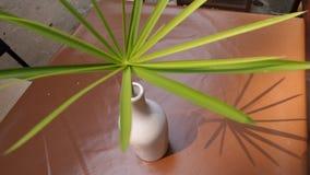 Тень зеленого разрешения в белой вазе стоковое фото