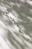 Тень листьев на белой стене стоковая фотография rf