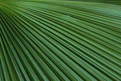 Тень лист и текстуры ладони Стоковые Фото