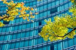 Тень и здание дерева в зоне дела Стоковое Изображение RF