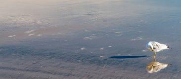 Тень и отражение чайки на пляже мочат стоковое фото