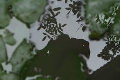 Тень камеры на воде Стоковое Изображение RF
