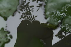 Тень камеры на воде Стоковое фото RF