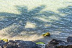 Тень кокосовой пальмы в воде Стоковая Фотография