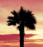 Тень кокосовой пальмы силуэта на оранжевом небе захода солнца Стоковое Изображение