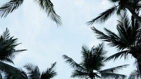 Тень кокосовой пальмы с ясным небом стоковое изображение