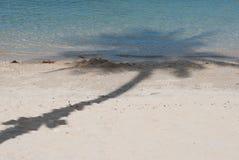 Тень кокосовой пальмы на пляже Стоковые Фото