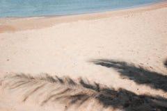 Тень кокосовой пальмы Стоковая Фотография