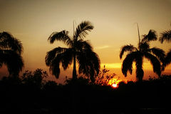 Тень кокосовых пальм и захода солнца Стоковое фото RF