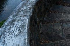 Тень крупного плана дерева Стоковое фото RF