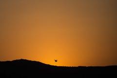 Тень летания стоковое фото