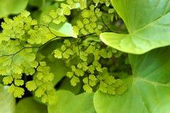тень листва Стоковые Фотографии RF