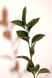 тень листьев Стоковые Фото