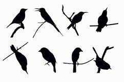 Тень маленьких птиц Стоковая Фотография RF
