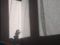 Тень на стене стоковые фотографии rf