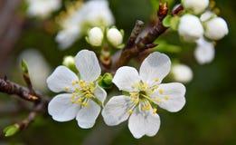 Тень на цветках Стоковое фото RF