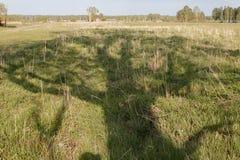 Тень от старого сиротливого положения тополя в поле на солнечный день стоковые фотографии rf