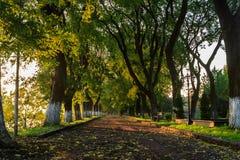 Тень предыдущих деревьев осени Стоковое фото RF