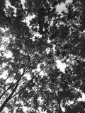 Тень серого цвета Стоковые Фото