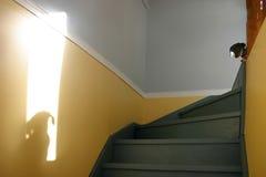 тень собаки Стоковое Изображение RF